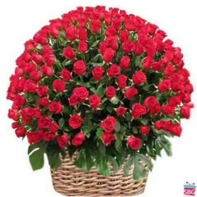 Red Roses Basket 500 Flowers