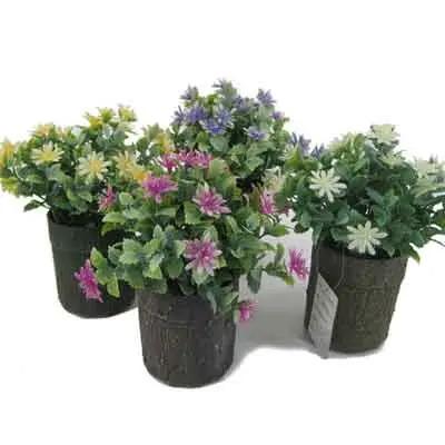 Anemone Flowers Plant