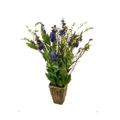Statice Flowers Plant