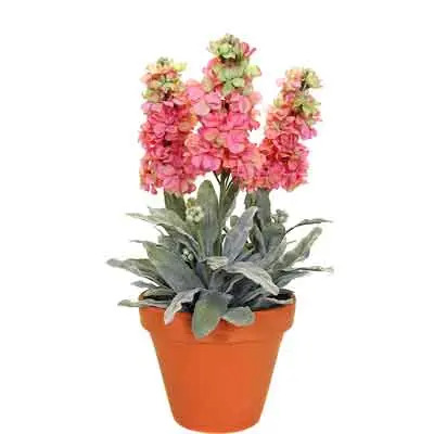 Stock Flowers Plant