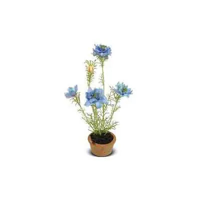 Nigella Flowers Plant