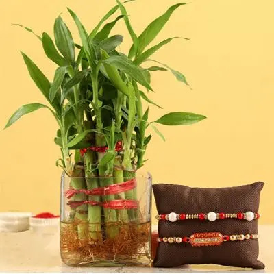 Rakhi with Bamboo Plant