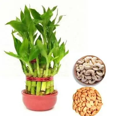 2 Layer Lucky Bamboo with Almonds & Cashew