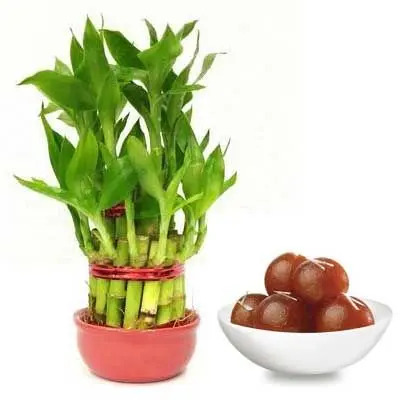 2 Layer Lucky Bamboo with Gulab Jamun