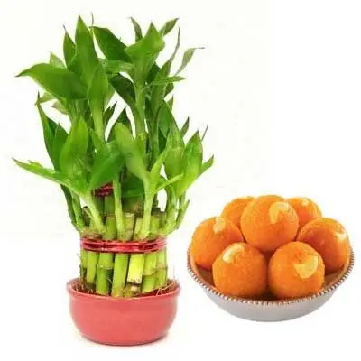 2 Layer Lucky Bamboo with MotiChoor Laddu