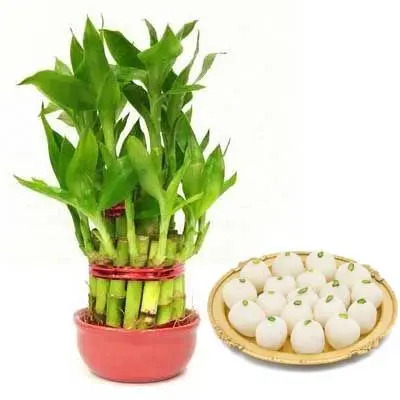 2 Layer Lucky Bamboo with Rasgulla