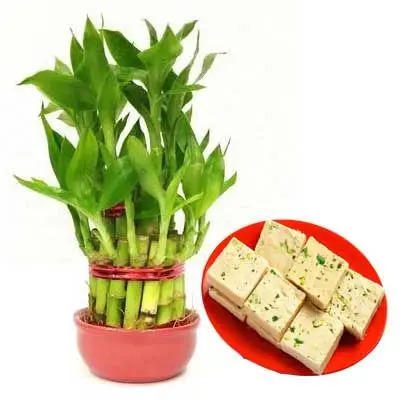2 Layer Lucky Bamboo with Soan Papdi