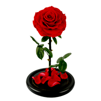 Rose Day Gifts for Husband
